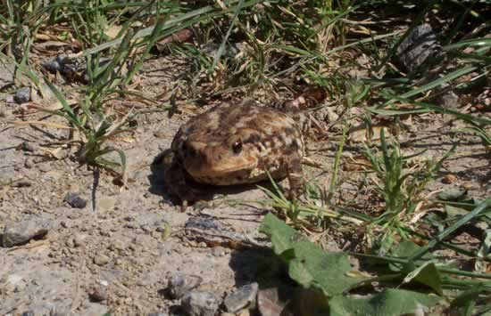 Herpetology in France